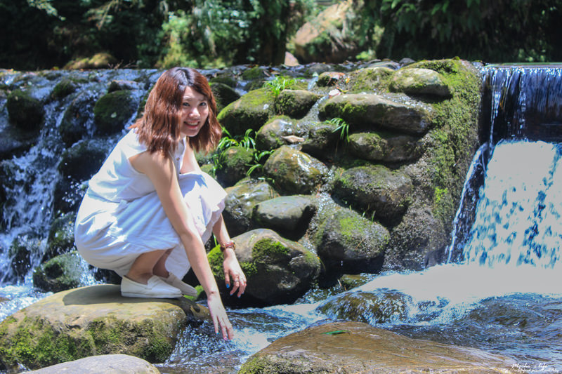 杉林溪繡球花
