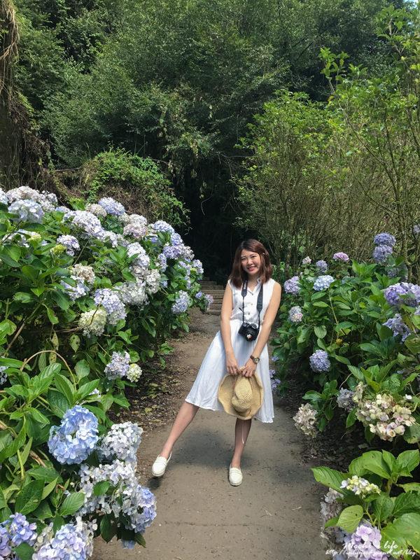 杉林溪繡球花交通