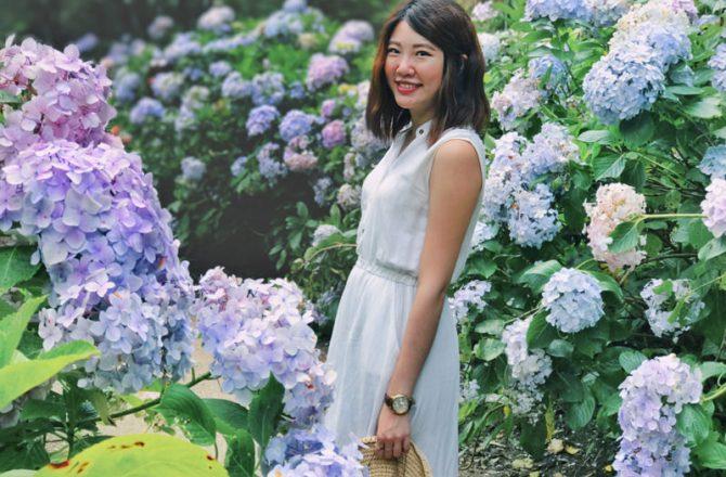 杉林溪繡球花|夢幻繡球花步道,一旁的森林步道與瀑布更值得拍照(杉林溪門票、繡球花季時間5-8月)