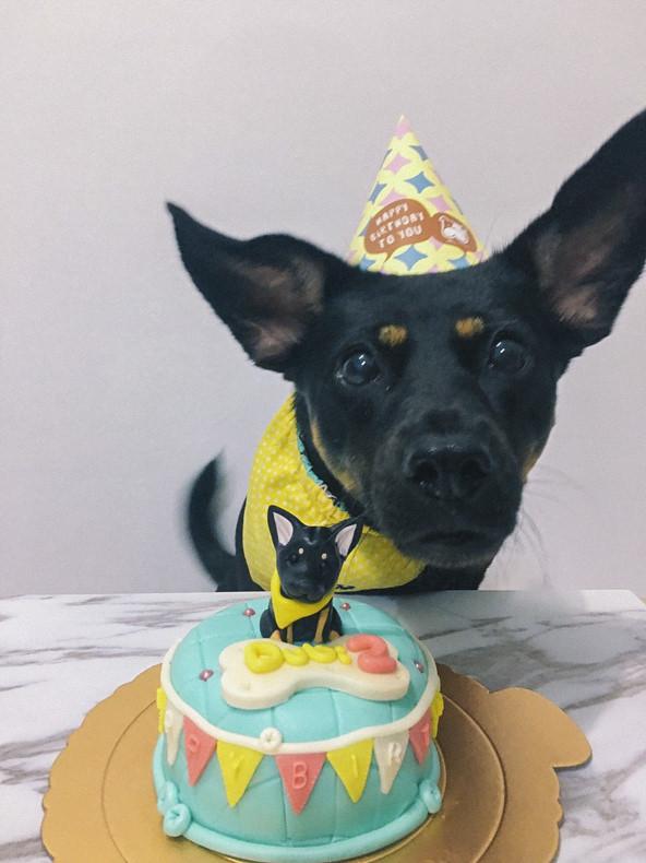 吉快樂寵物蛋糕
