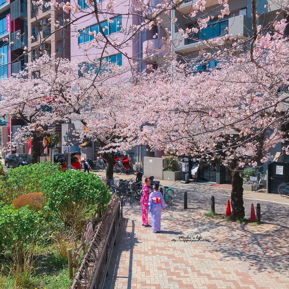 東京櫻花2019
