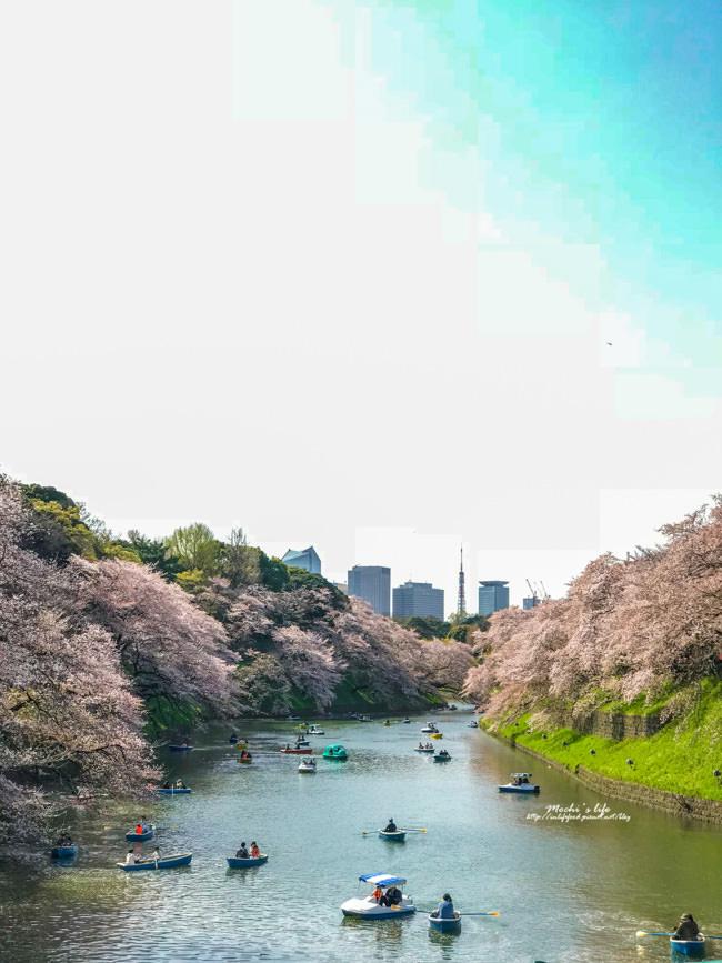 千鳥之淵櫻花