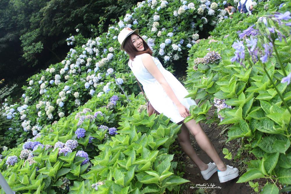 繡球花花期