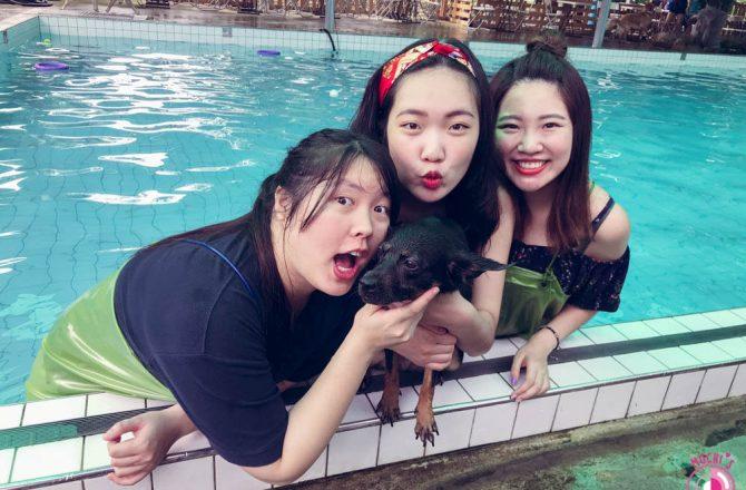 桃園寵物游泳池|林乖乖家的嬉水池:寵物的游泳天堂,下雨也可游!