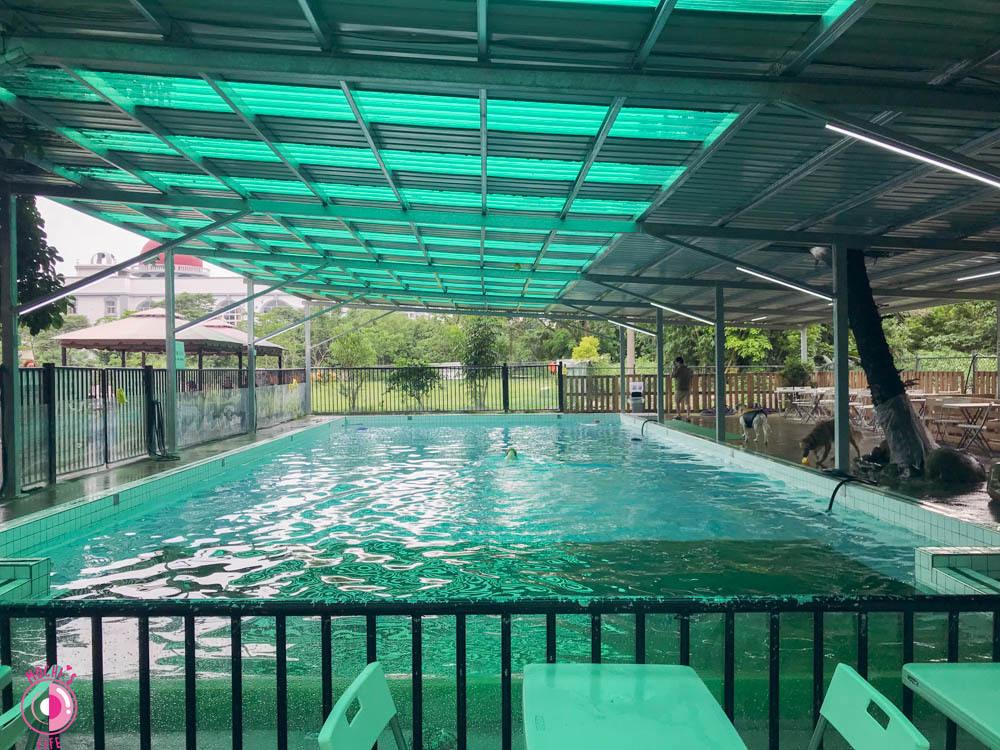 寵物游泳池