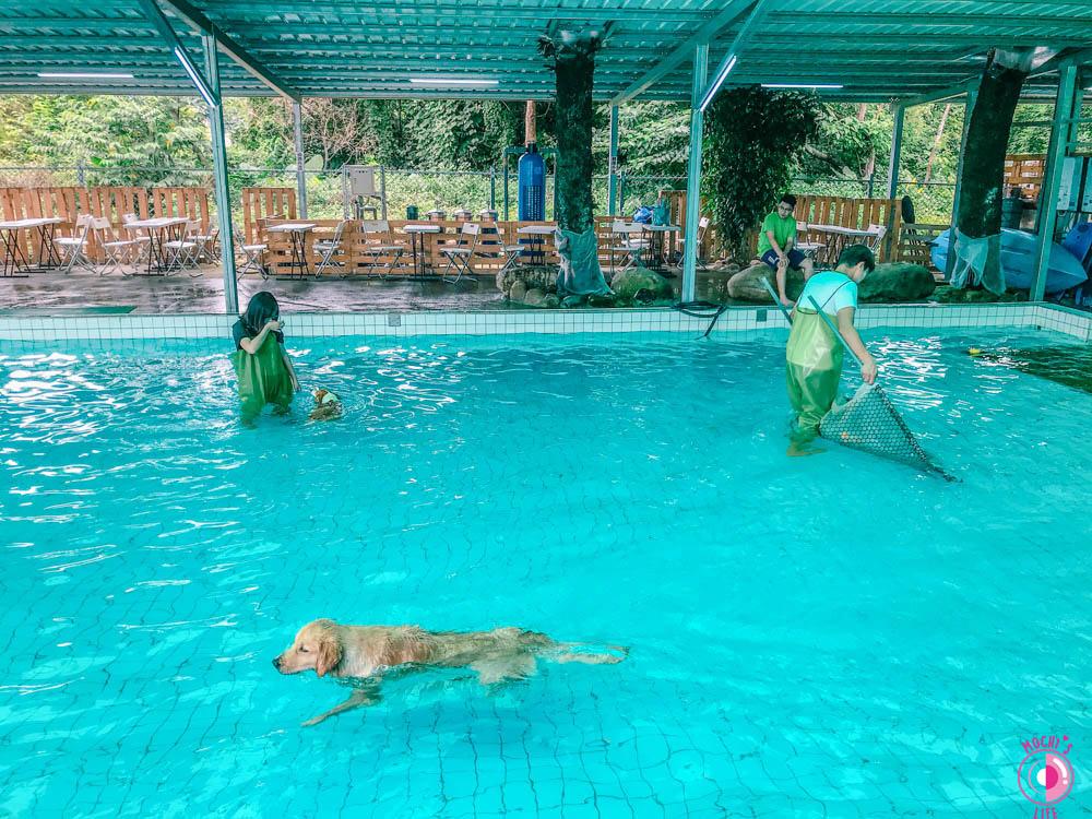 寵物游泳池桃園