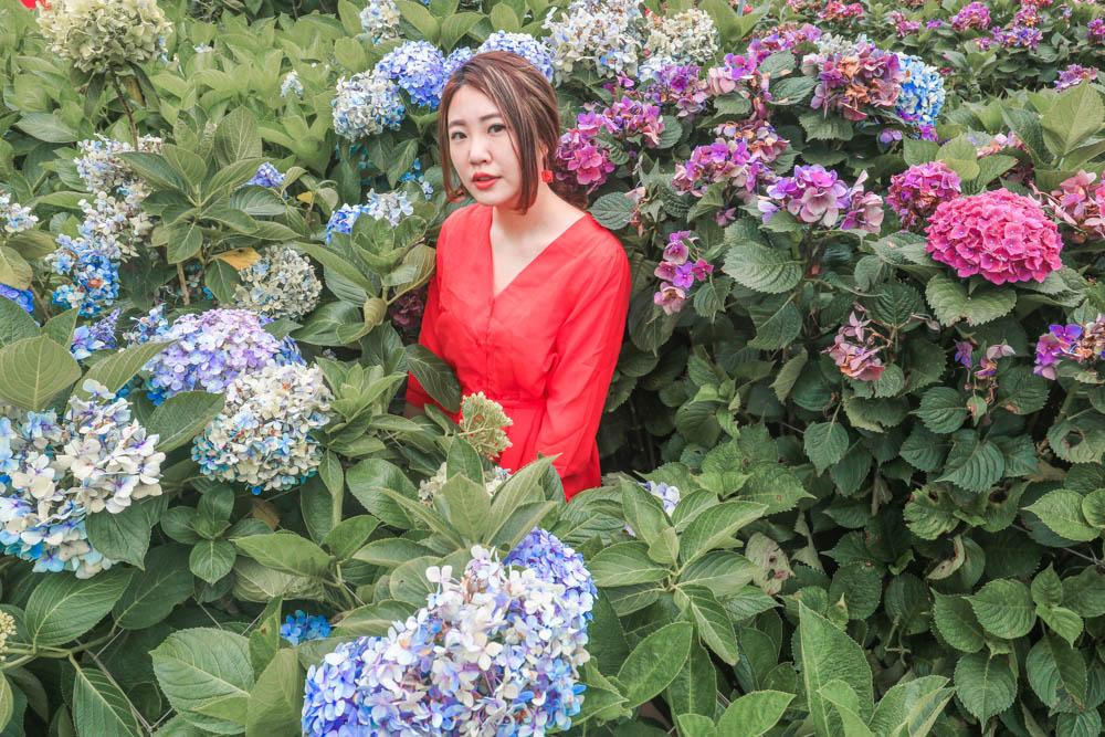 繡球花陽明山