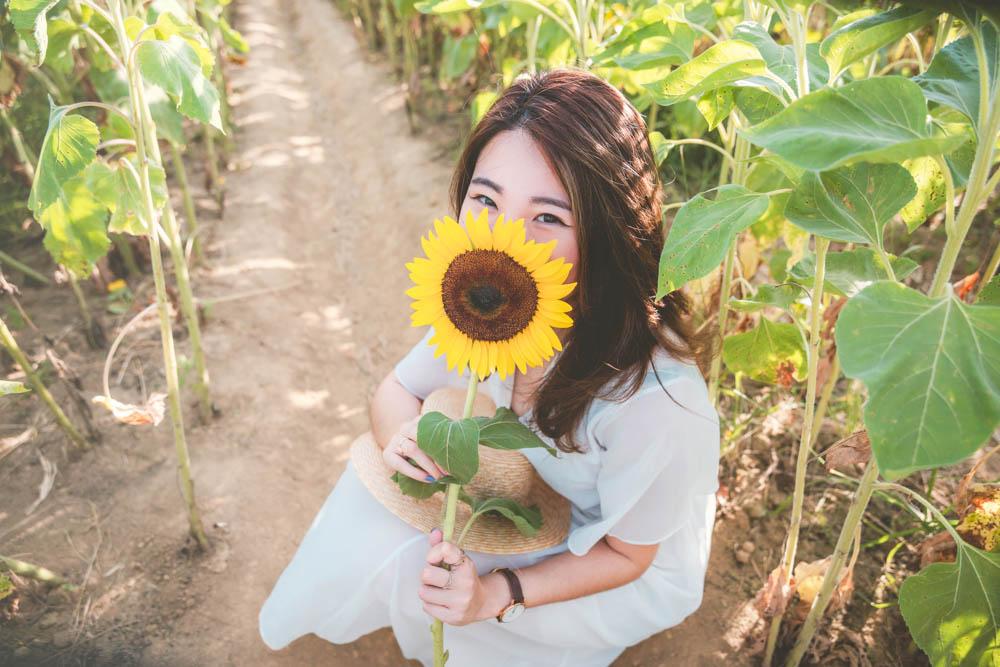 向陽農場花季