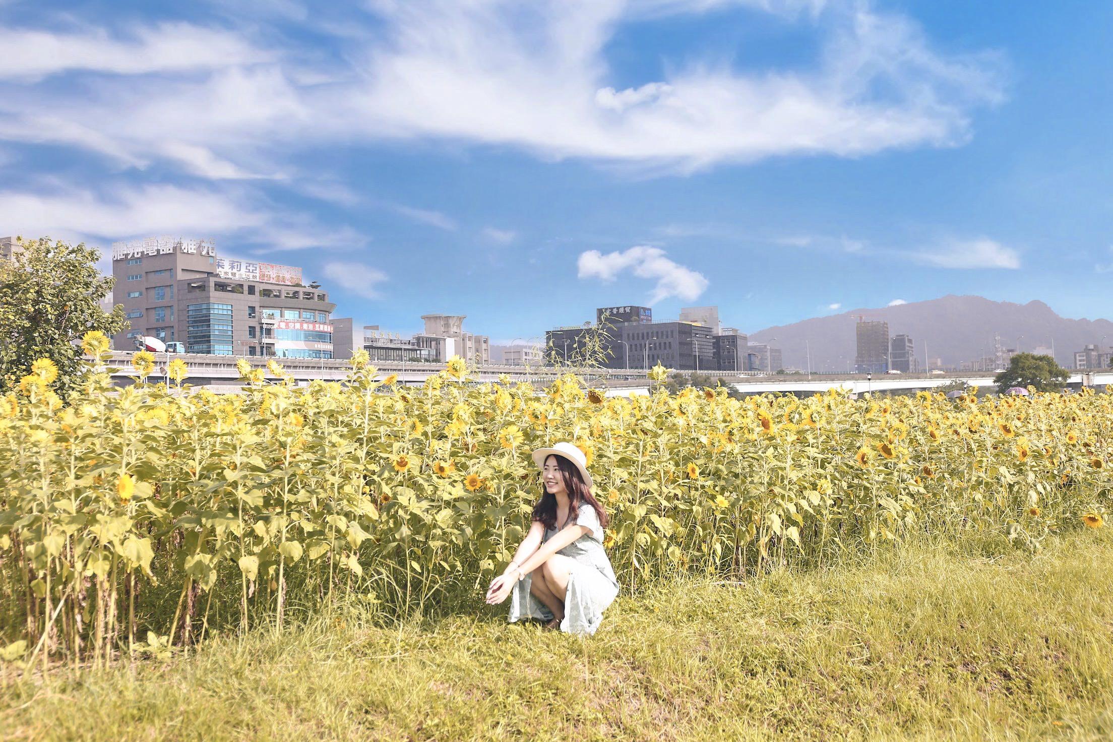 台北向日葵