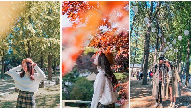 首爾一日遊景點 秋天必去!南怡島一日遊+江村鐵道自行車+晨靜樹木園/秋天限定銀杏楓葉超級美❤首爾近郊一日遊