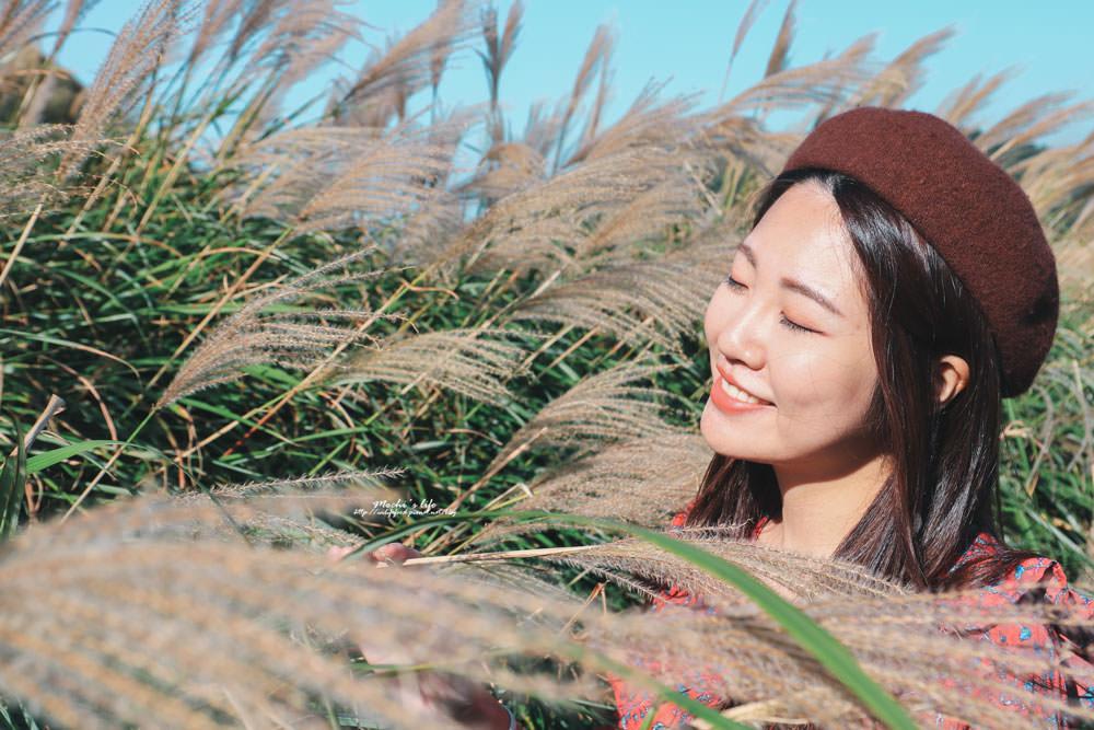 陽明山芒草季時間