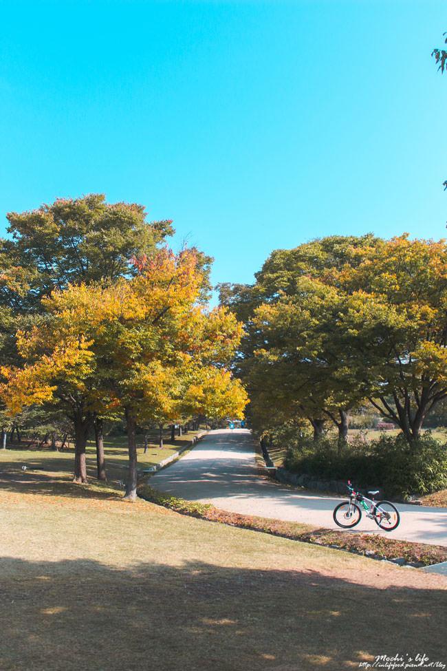 奧林匹克公園紅葉
