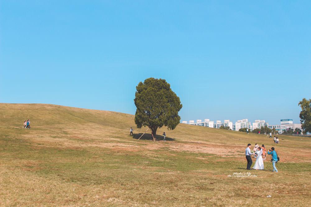 奧林匹克公園銀杏