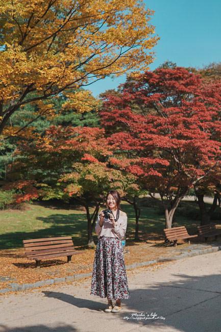 奧林匹克公園孤獨的樹