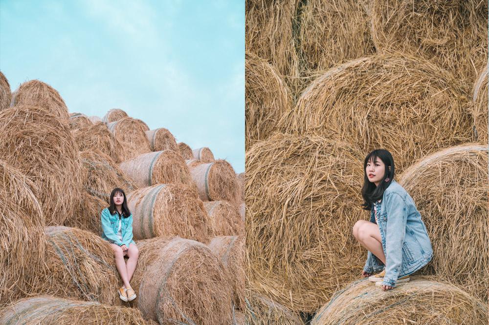 雲林虎尾IG景點|金億陽洋菇農場-稻草捲心酥:拍照前先看營業時間!網美必拍,照片角度分享