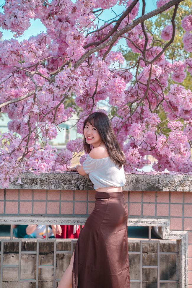 粉紅風鈴木花期