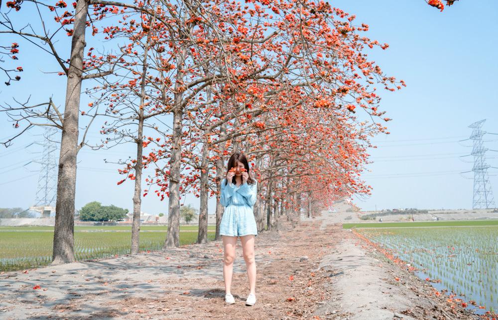 木棉花季節