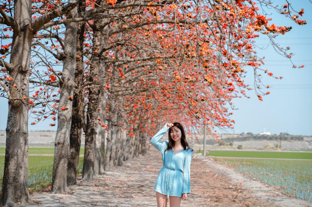 彰化木棉花景點|竹塘木棉花道:IG火紅木棉花道,紅綠相間 花季二月底盛開中