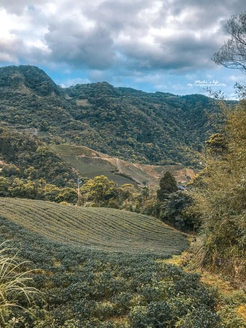 坪林私房景點