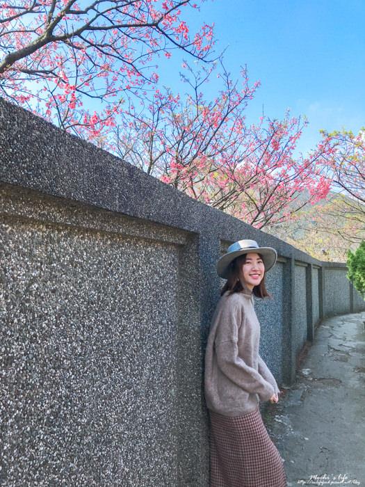陽明山櫻花平菁街