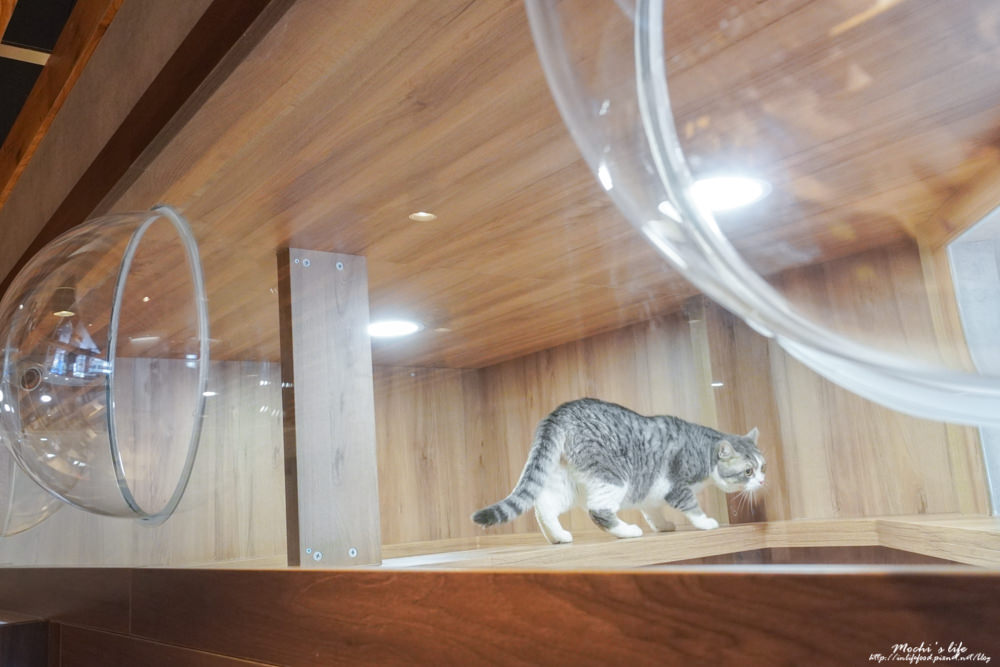 新竹貓咪旅館