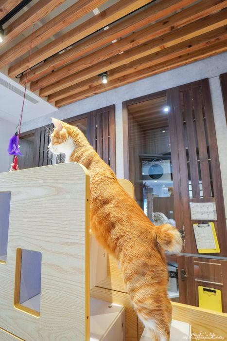貓旅館新竹