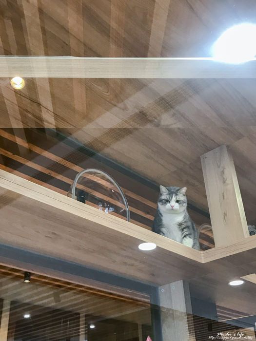 貓咪旅館推薦