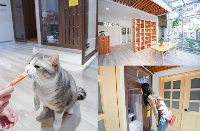 新竹貓咪旅館|牧貓精品寵物旅館:像在家一般的自在~總統級貓旅館,長住也很歡迎