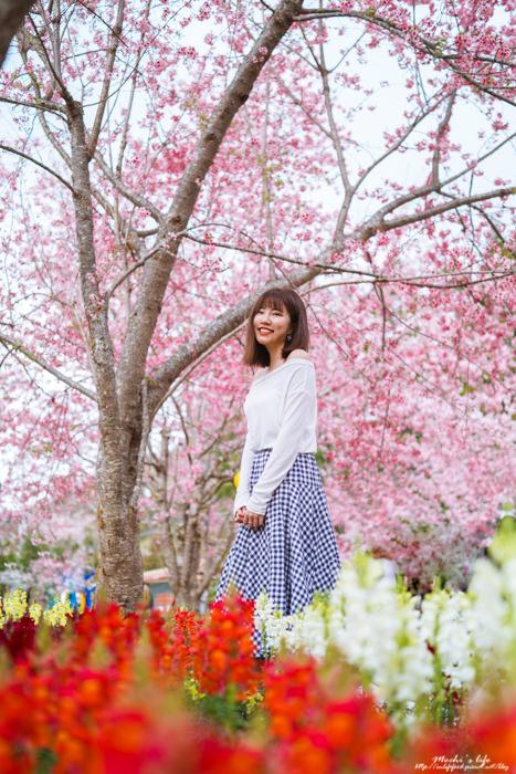 桃園櫻花景點