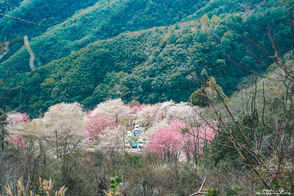 萬里山園櫻花