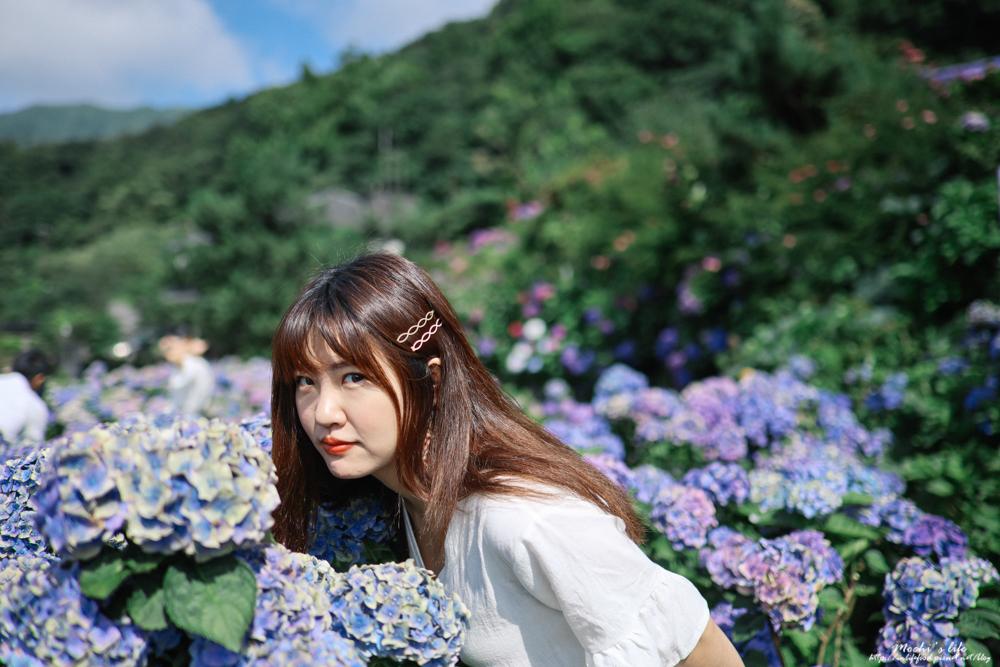 陽明山繡球花公車