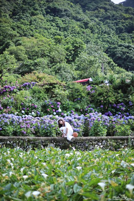 陽明山繡球花計程車