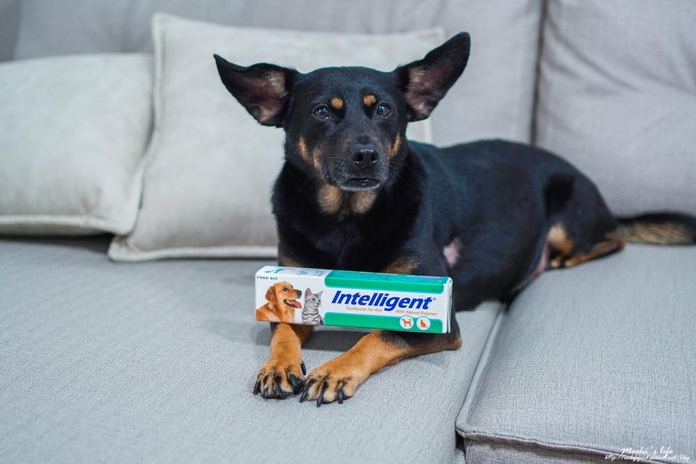 寵物牙膏推薦|因特力淨寵物酵素牙膏:狗狗嘴巴臭牙結石怎麼辦?可以吃下去的狗狗專用牙膏