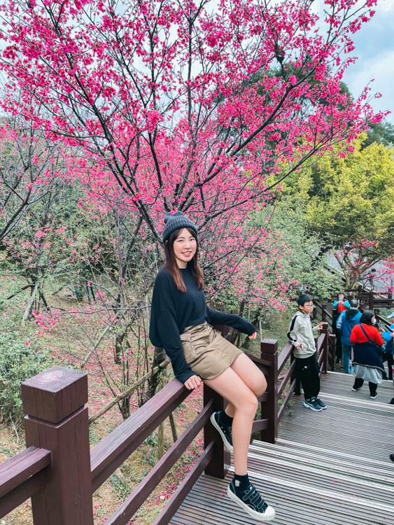 樹林櫻花林