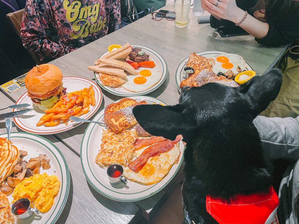 樂子瑞安店,科技大樓站餐廳,台北寵物友善餐廳大安,樂子大安,台北早午餐推薦