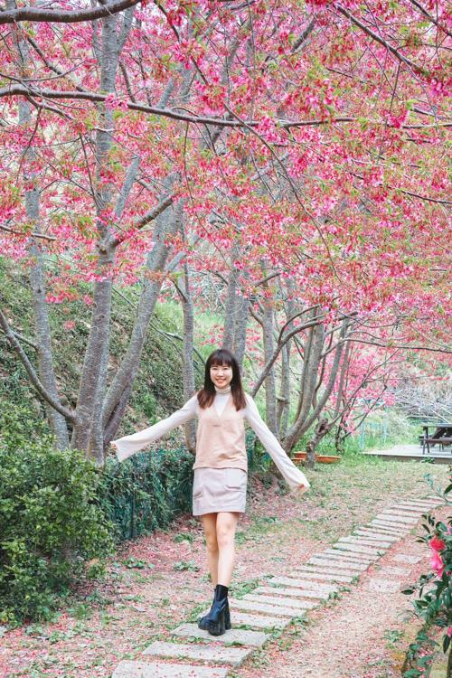 楓墅農場,桃園櫻花秘境,拉拉山櫻花拉拉山櫻花住宿,拉拉山櫻花管制