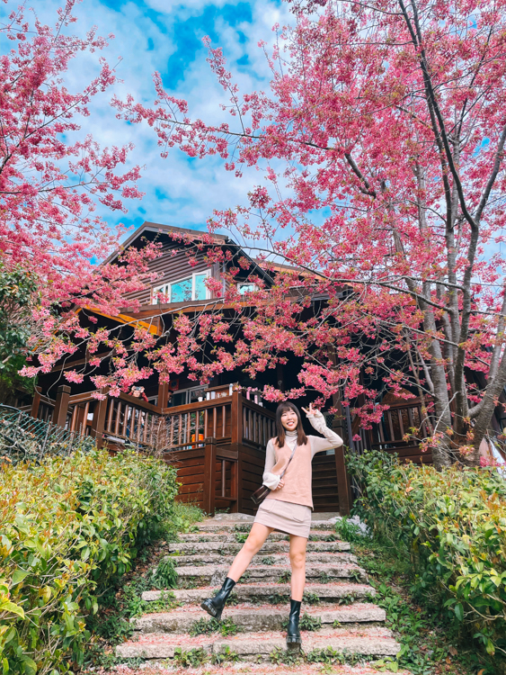 拉拉山櫻花住宿拉拉山櫻花管制,拉拉山路況,拉拉山接駁車,楓墅農場
