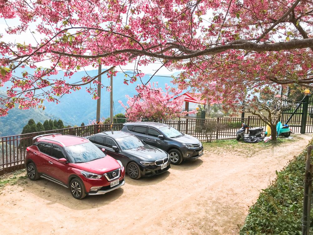 拉拉山櫻花住宿拉拉山櫻花管制,拉拉山路況,拉拉山接駁車,觀雲山莊