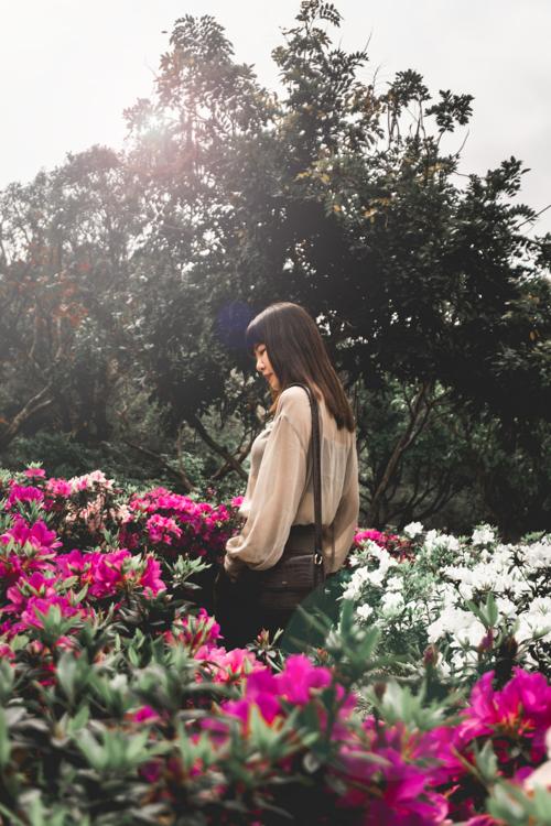 大安森林公園杜鵑花,大安森林公園繡球花幾號出口,台北市區賞花,台北捷運一日遊,台北捷運景點
