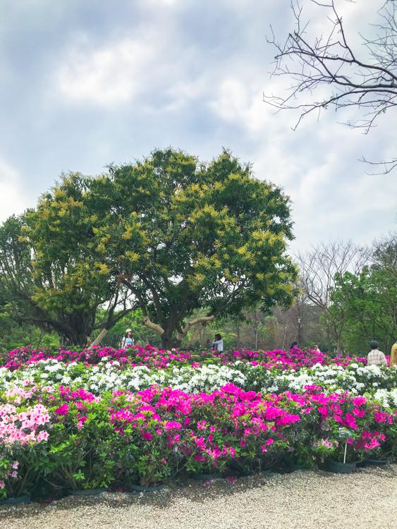 大安森林公園,大安森林公園野餐,大安森林公園花季,大安森林公園繡球花,大安森林公園繡球花幾號出口