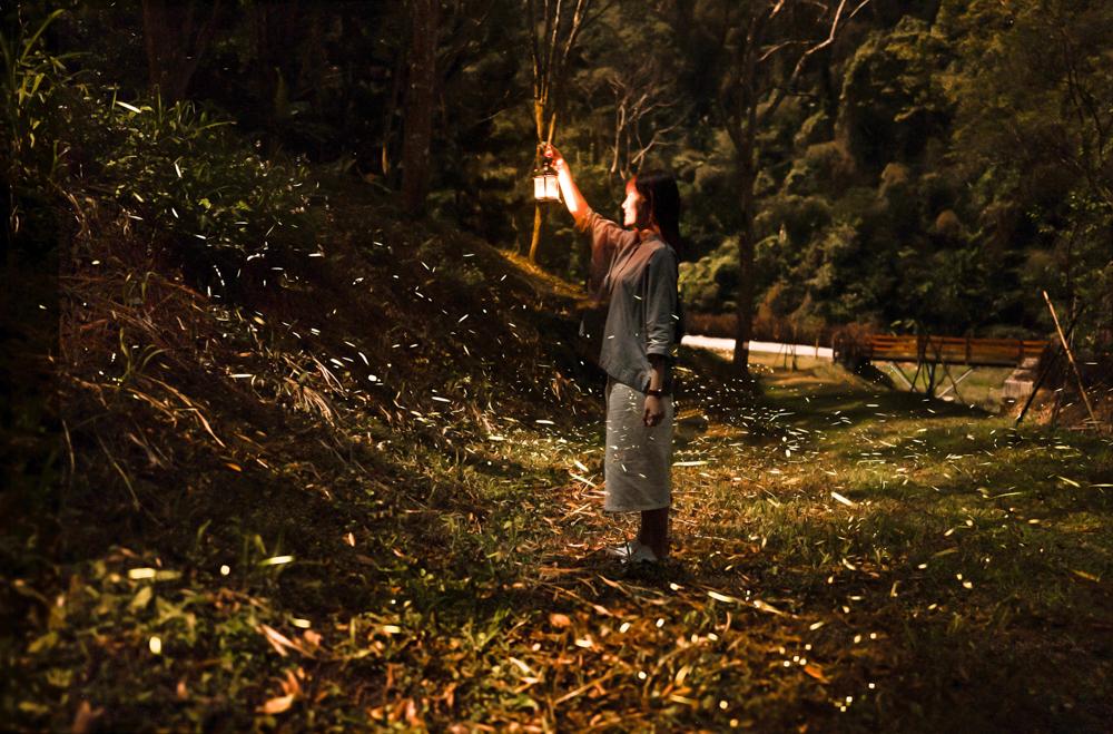 螢火蟲怎麼拍,螢火蟲季節露營,中部螢火蟲住宿,東勢林場螢火蟲季節,螢火蟲時間