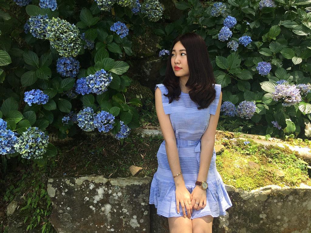 20160625苗栗繡球花_5177