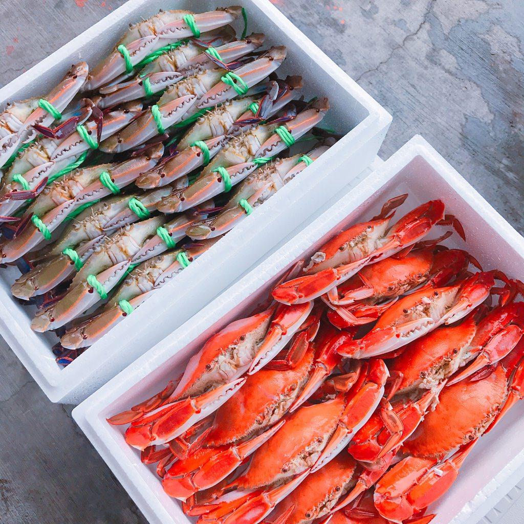 萬里蟹季節