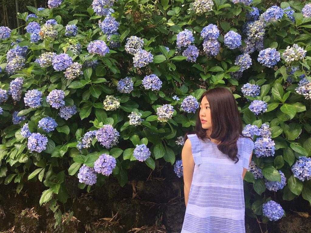 20160625苗栗繡球花_433