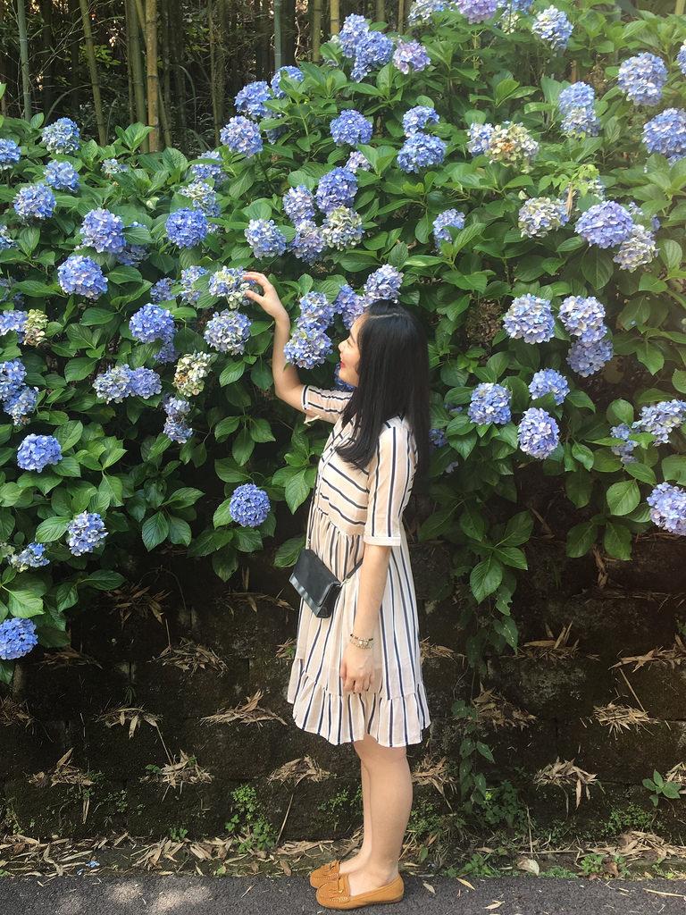 20160625苗栗繡球花_2993