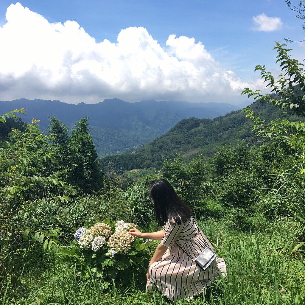 20160625苗栗繡球花_4605