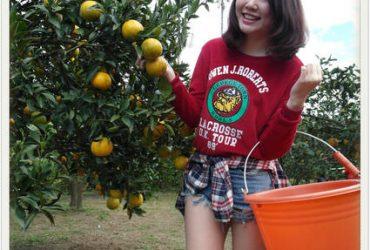 新竹一日遊 ▌「北埔老街」:北埔一日遊,到北埔老街採橘子吃客家菜